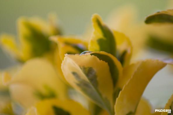 Flores de la Terraza - Amarillo