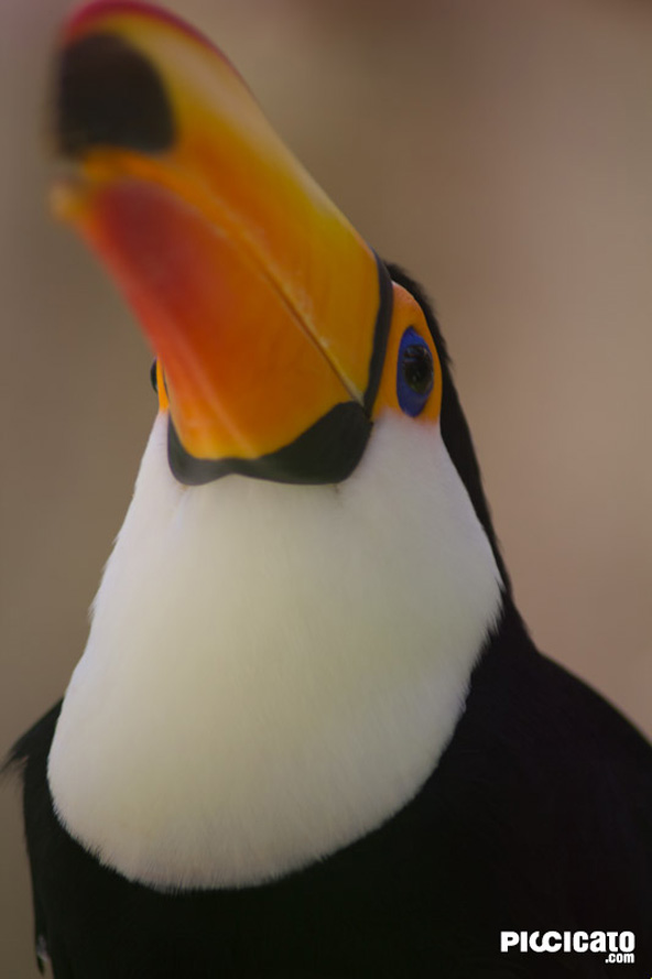 tucan-mundo-mar-benidorm